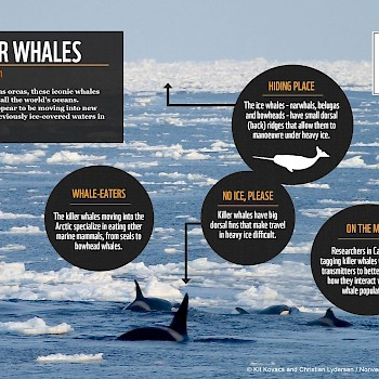/site/assets/files/1109/killer_whale_facts.jpg